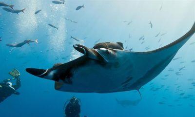 Manta Point Diving Sport